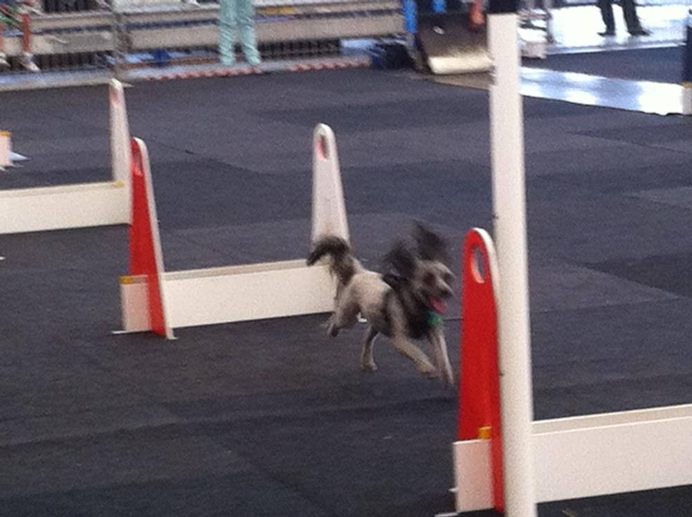 Fly little guy, fly!