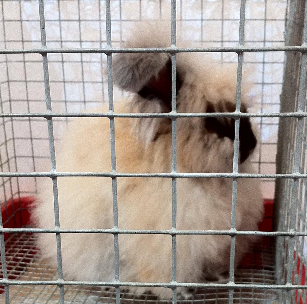 strange rabbits.JPG