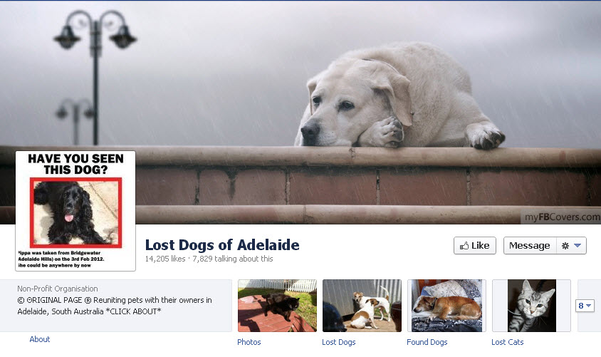 Lost dogs of Adelaide.jpg