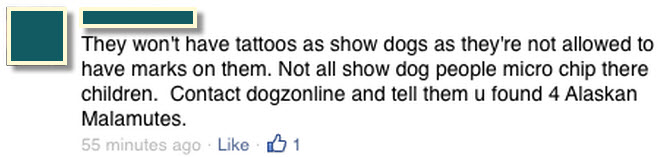 Show dogs aren't tattooed Malamutes.jpg