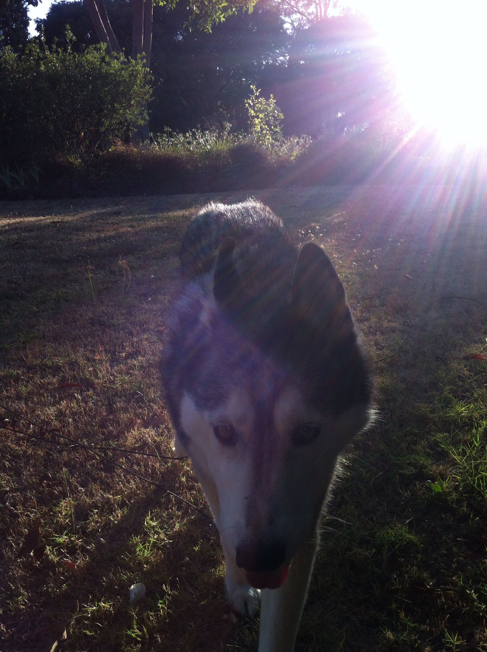 Out the front, with Ishka, morning...