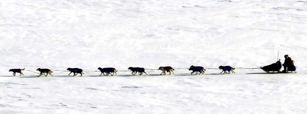 Canadian musher Sebastian Schnuelle drives his team across Norton Bay Monday near the Shaktoolik, Alaska checkpoint on the Iditarod Trail Sled Dog Race. (AP Photo/Al Grillo)