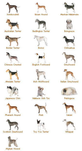 Dogs Types Names List