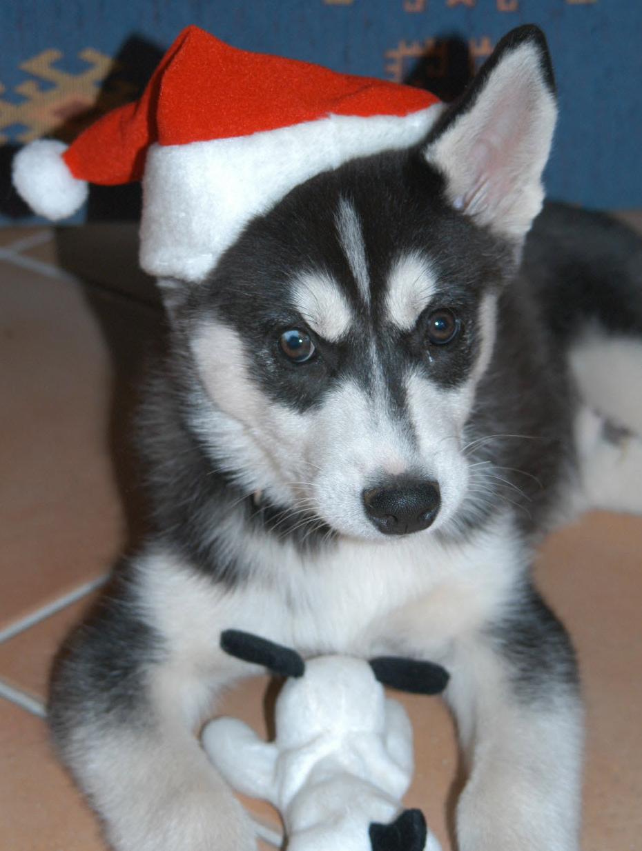 Cooper aged 8 weeks.