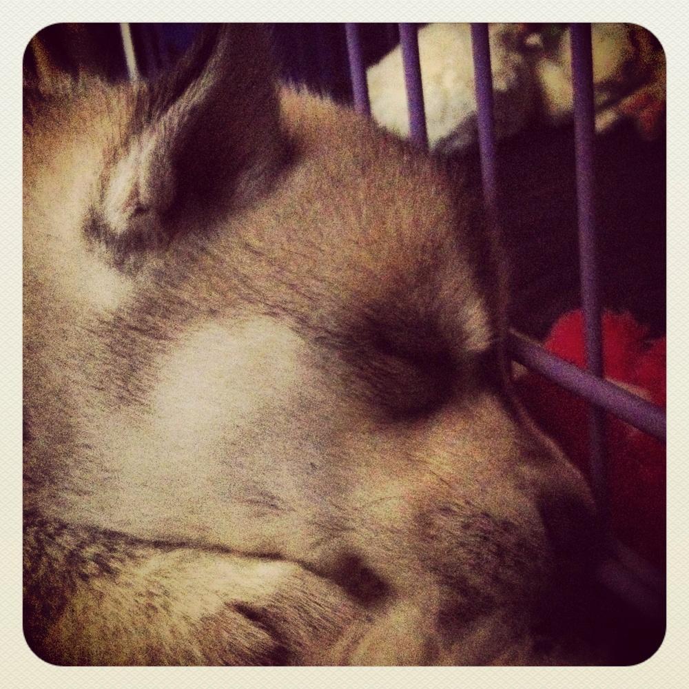 Much asleeping!