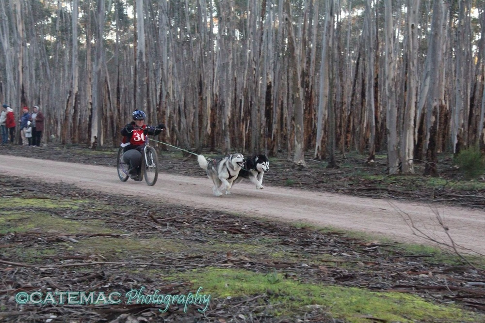 Take off - low and fast, with two flying huskies!