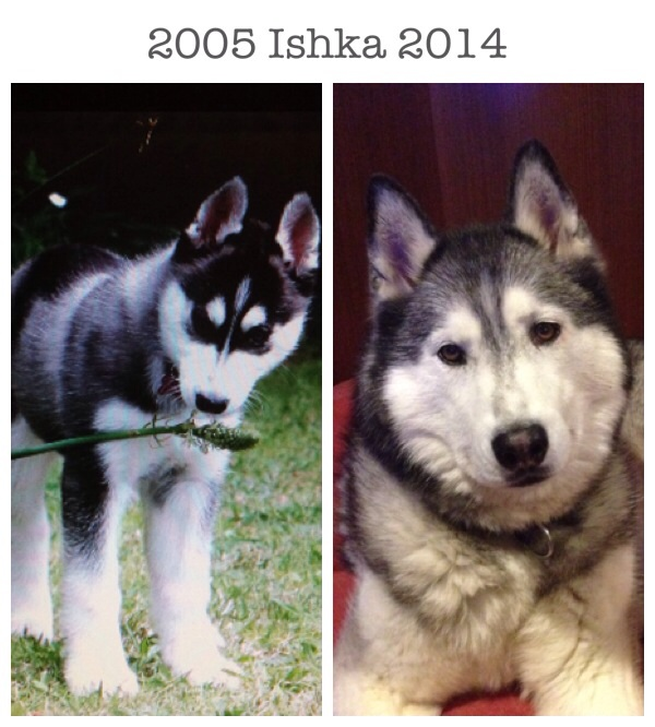 Three month old Ishka, and nine year old Ishka.