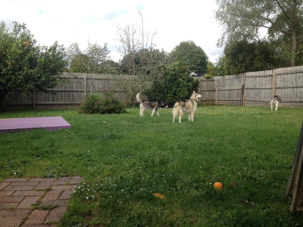 exploring the backyard
