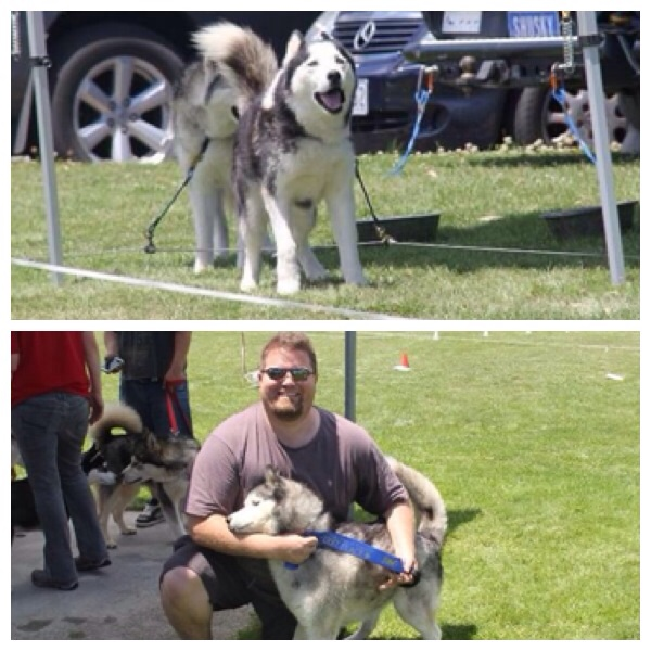 Bolo and Ishka in the Noisiest Dog competition.  Thankyou CD for the pics!