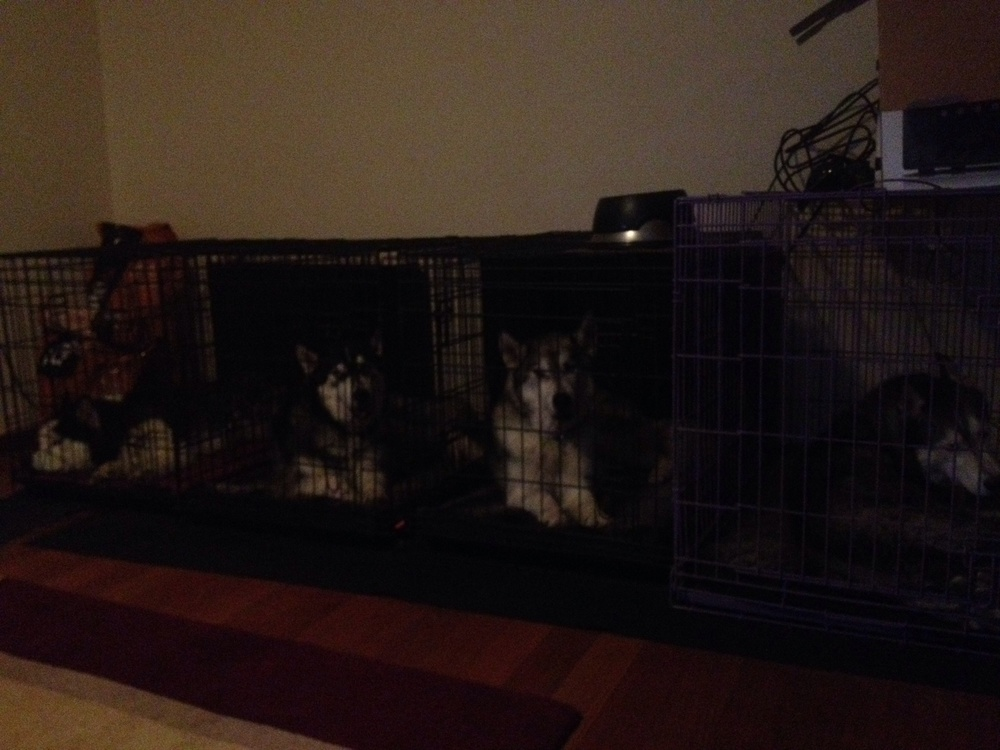Before: Ishka's big crate on the right, three smaller boy's crates on the left.