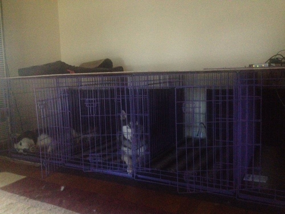 After: 4 large crates, topped with plywood for ease of storage. Happy dogs!