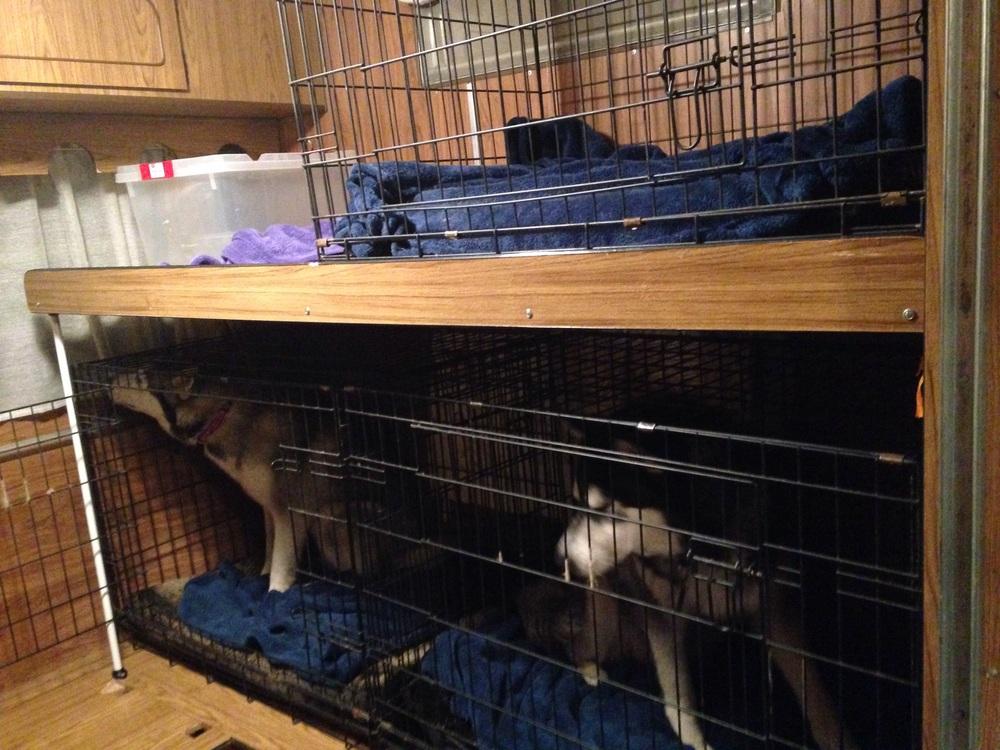 Frankie and Ishka debate the merits of the bottom bunk.