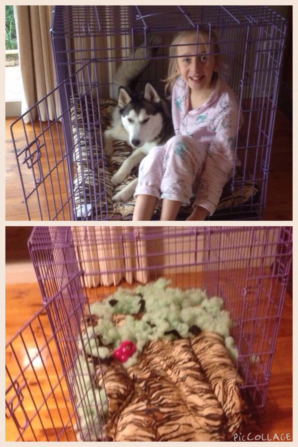 Hanging out with her new sister in her new crate... And the same crate an hour later - Mia!!!