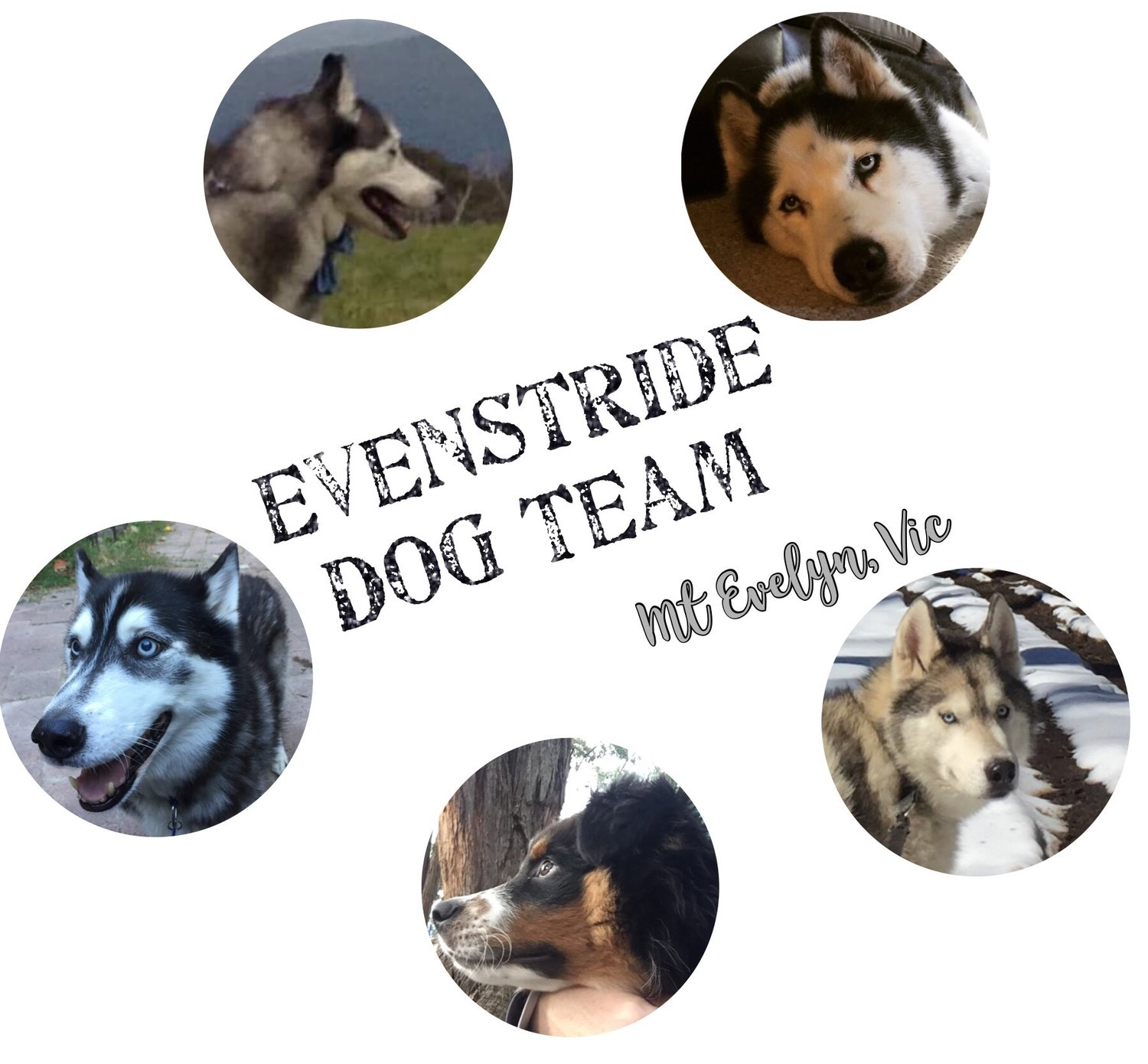 Evenstride Dog Team