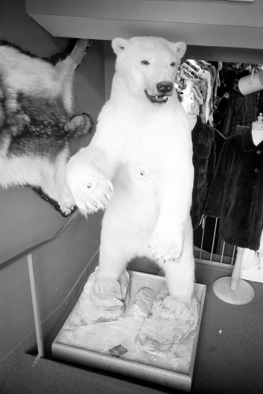 polar-bear-montreal.jpg