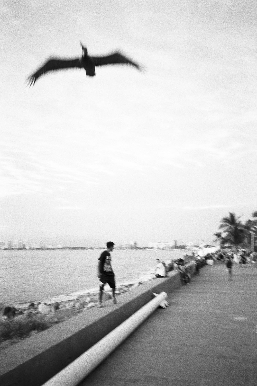 puerto-vallarta-2.jpg