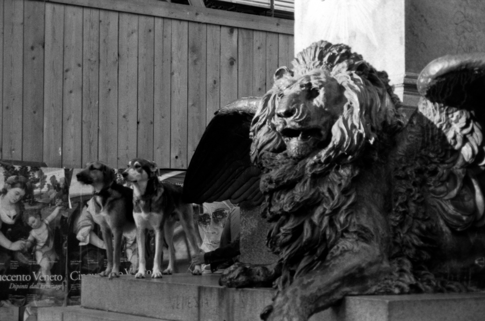 Venice_Dogs.jpg