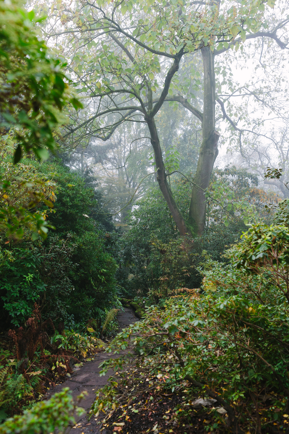Hortus-Botanicus-Amsterdam-Instagram-takeover-by-on-a-hazy-morning-16.jpg