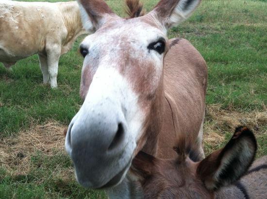 burro3.jpg