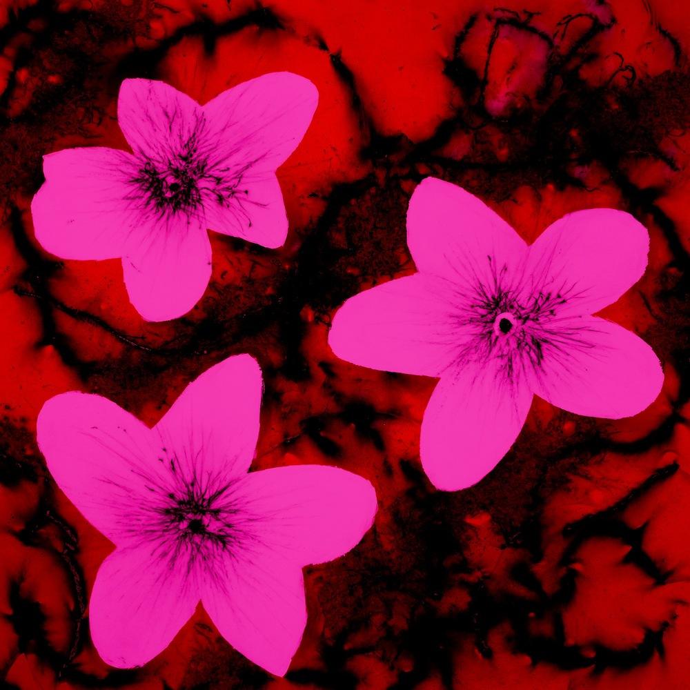 b(l)oom 3 Pink Red Sat.jpg