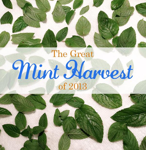 edmonton_events_style_blog_mint_recipes_harvest_herbs_fall_ideas_mint_tea_salad.jpg
