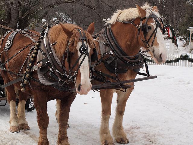 edmonton_shopping_sleigh_sled_rides_horses_carriage_old_strathcona.jpg