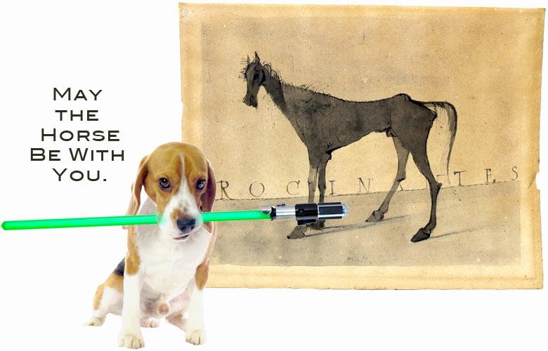 Beagle_Indy_MayTheHorseBeWithYou.jpg