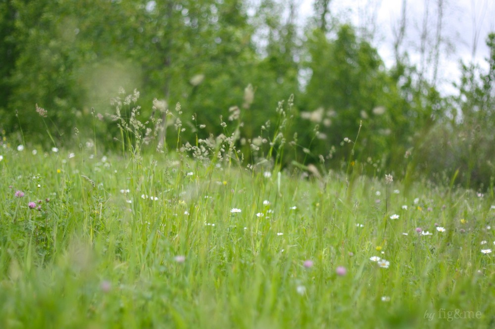 A summer meadow