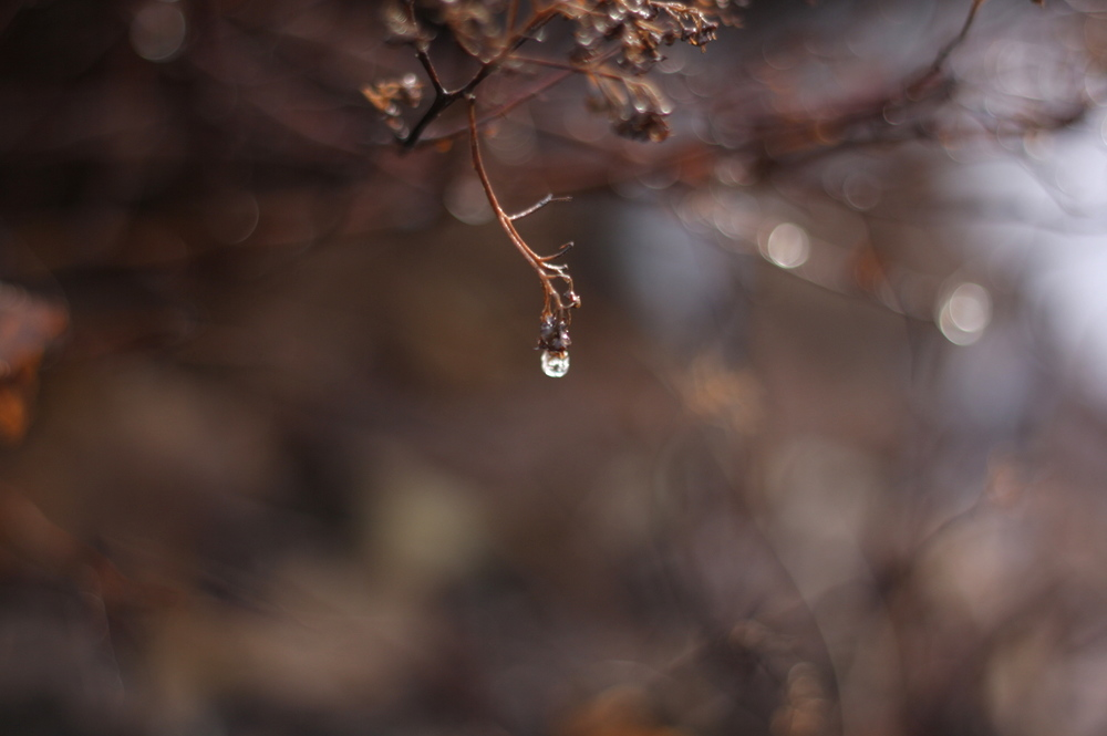 A lonely drop, by Fig&me