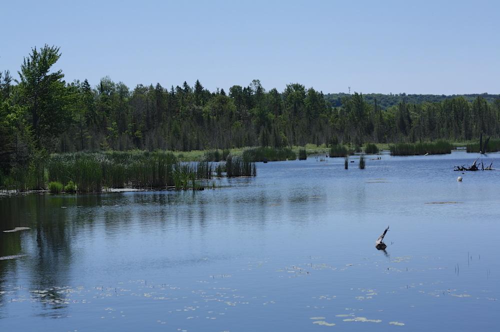 copeland-forest-lagoon.jpg