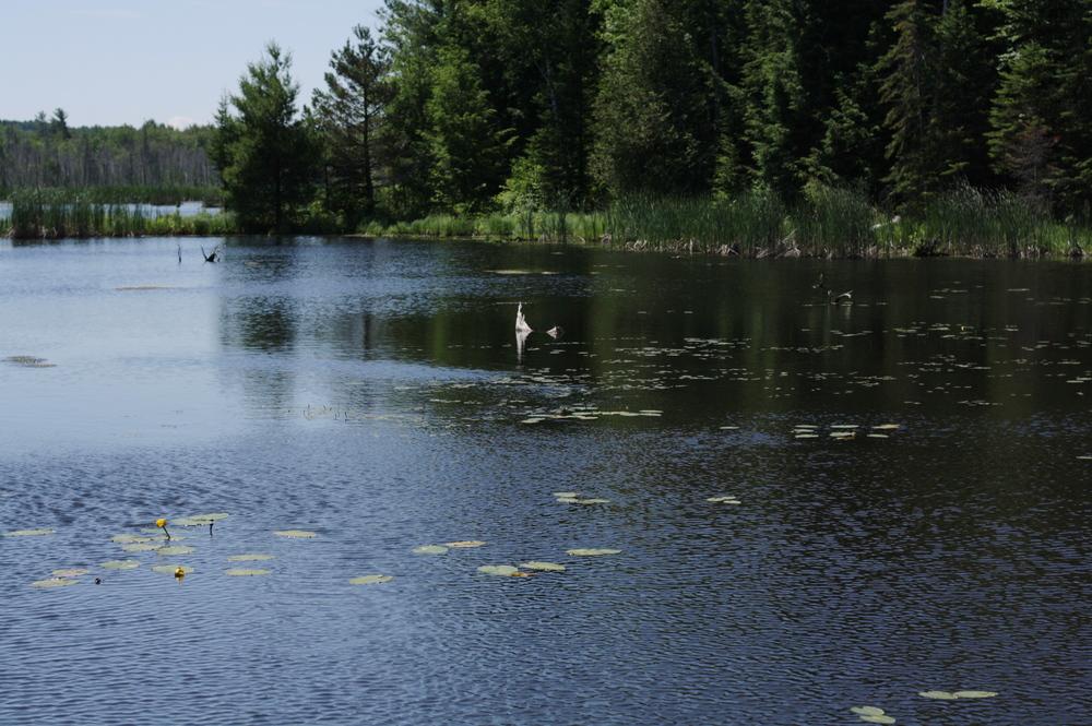 simcoe-forest-lagoon.jpg
