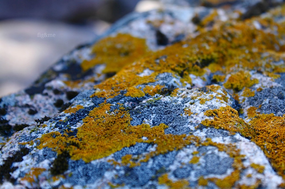 Lichen on rocks, by Fig and Me.