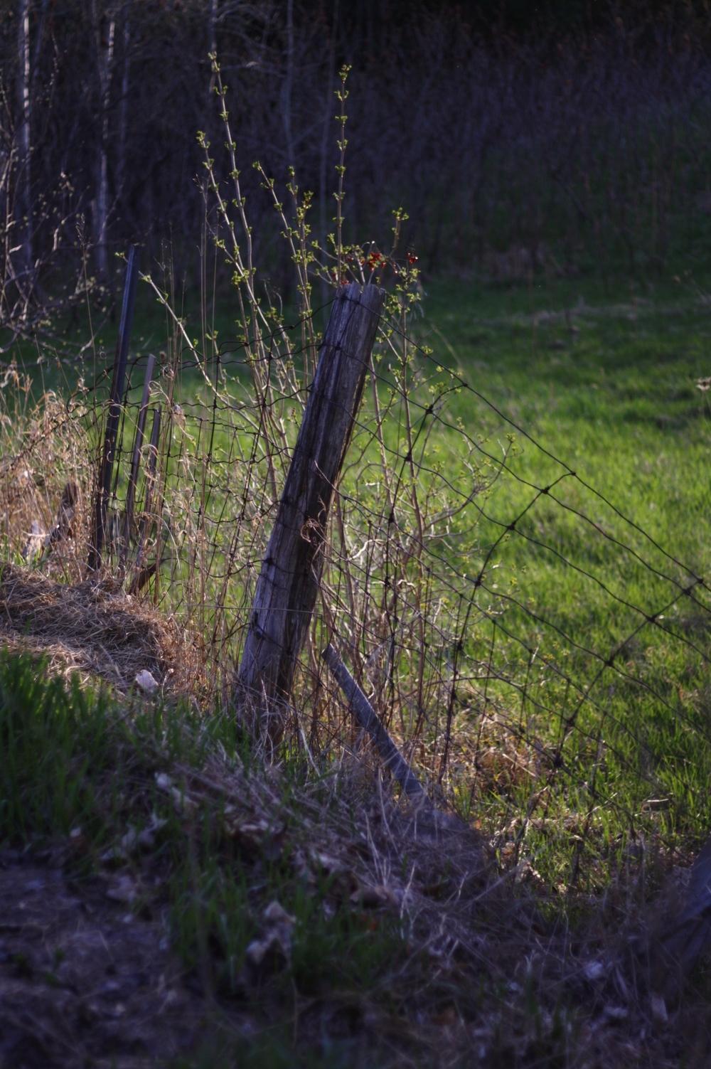 Poet's fence.