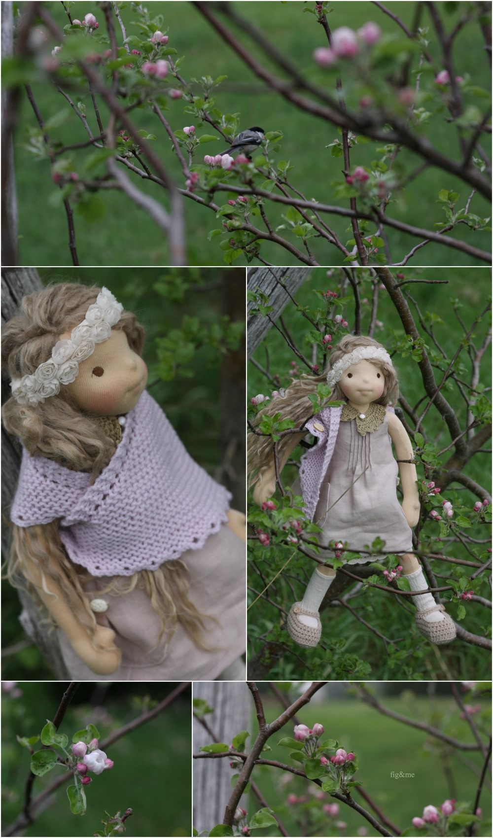 Pomona finds apple blossoms and chickadees, by Fig and me.