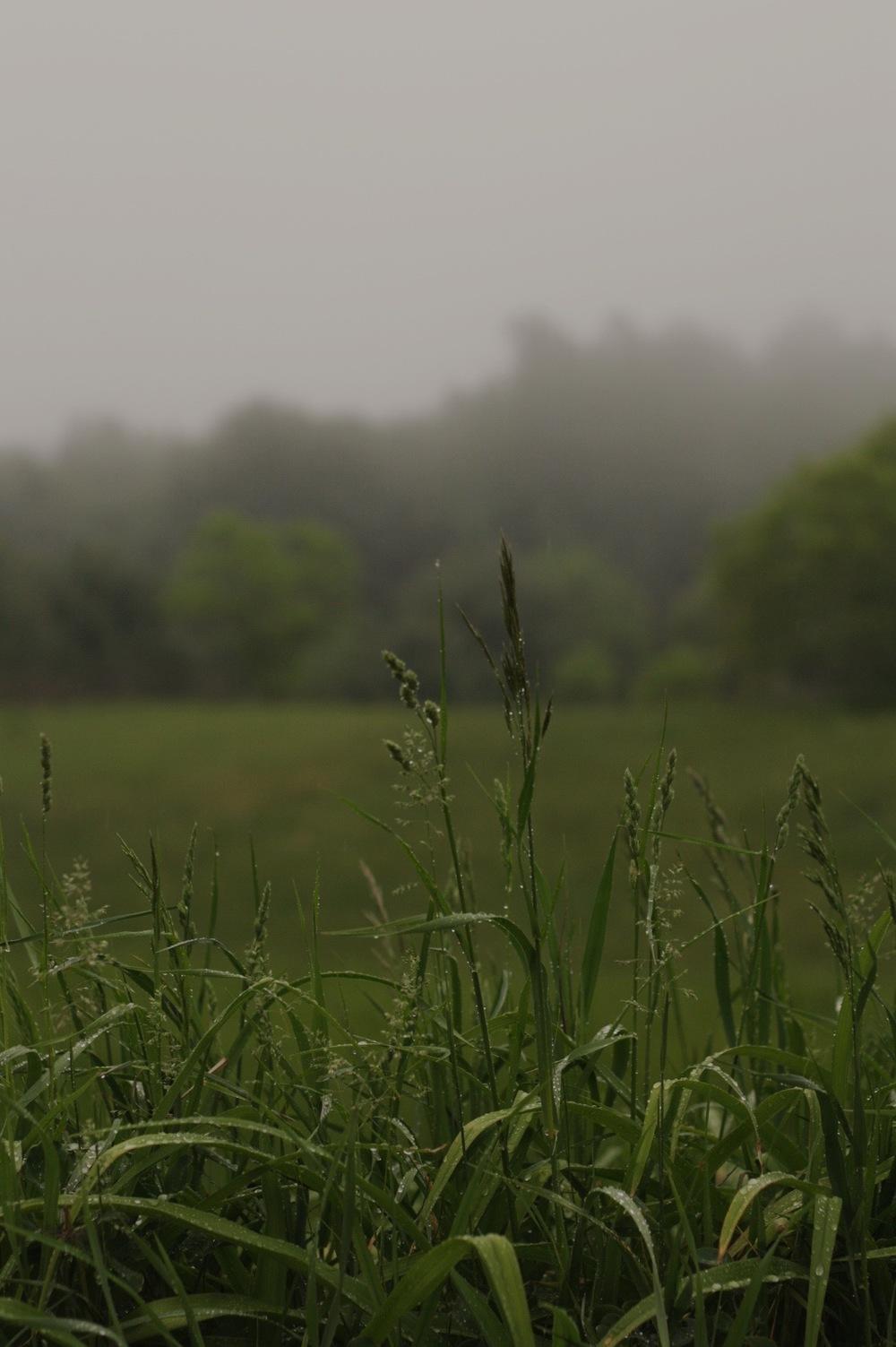 fog-figandme.jpg