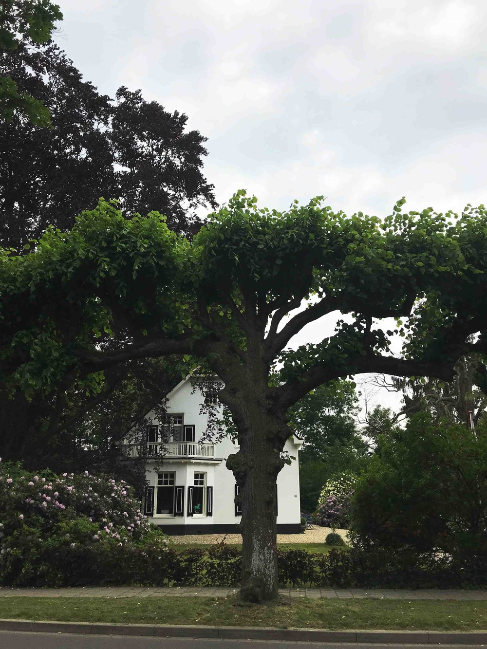 The most massive espalier-tree I ever saw. Epe, Holland.
