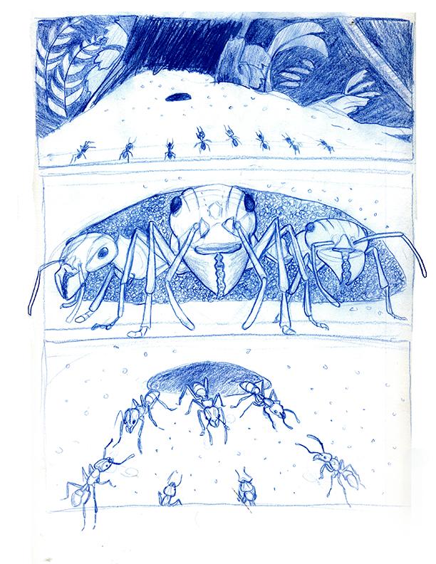bullet ant 1.jpg