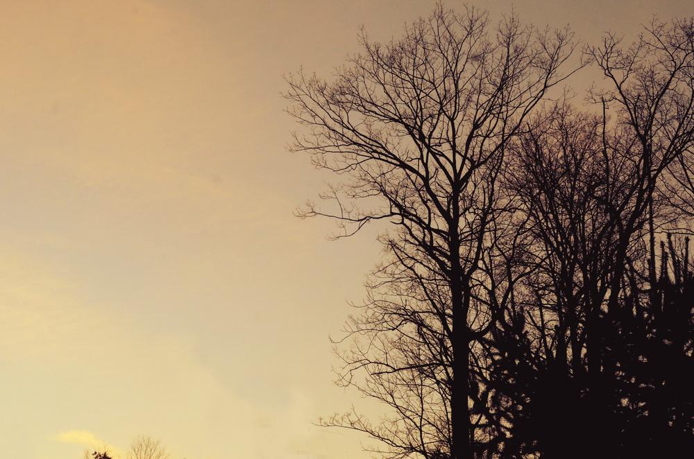 1trees4.jpg