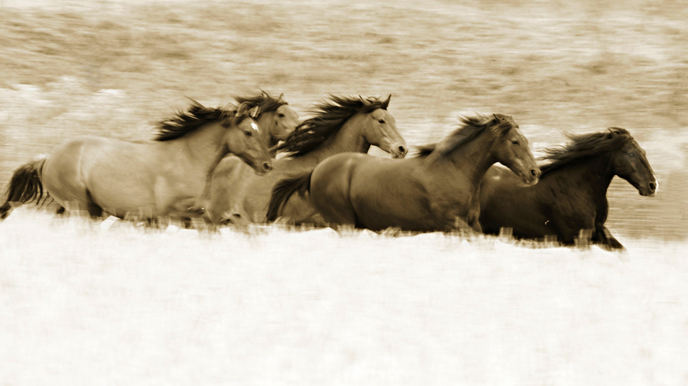 photos_of_wild_horses00041.jpg