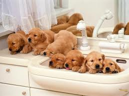 The story mentioned puppies so here are some puppies to liven things up a bit. (from www.fanpop.com)