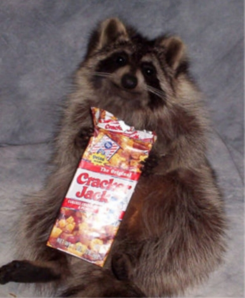 This is a stuffed raccoon. I repeat, this is a once living raccoon who has been taxidermied and posed to appear to be eating a box of cracker jacks. The world is a weird place folks. (theworldofkitsch.com)