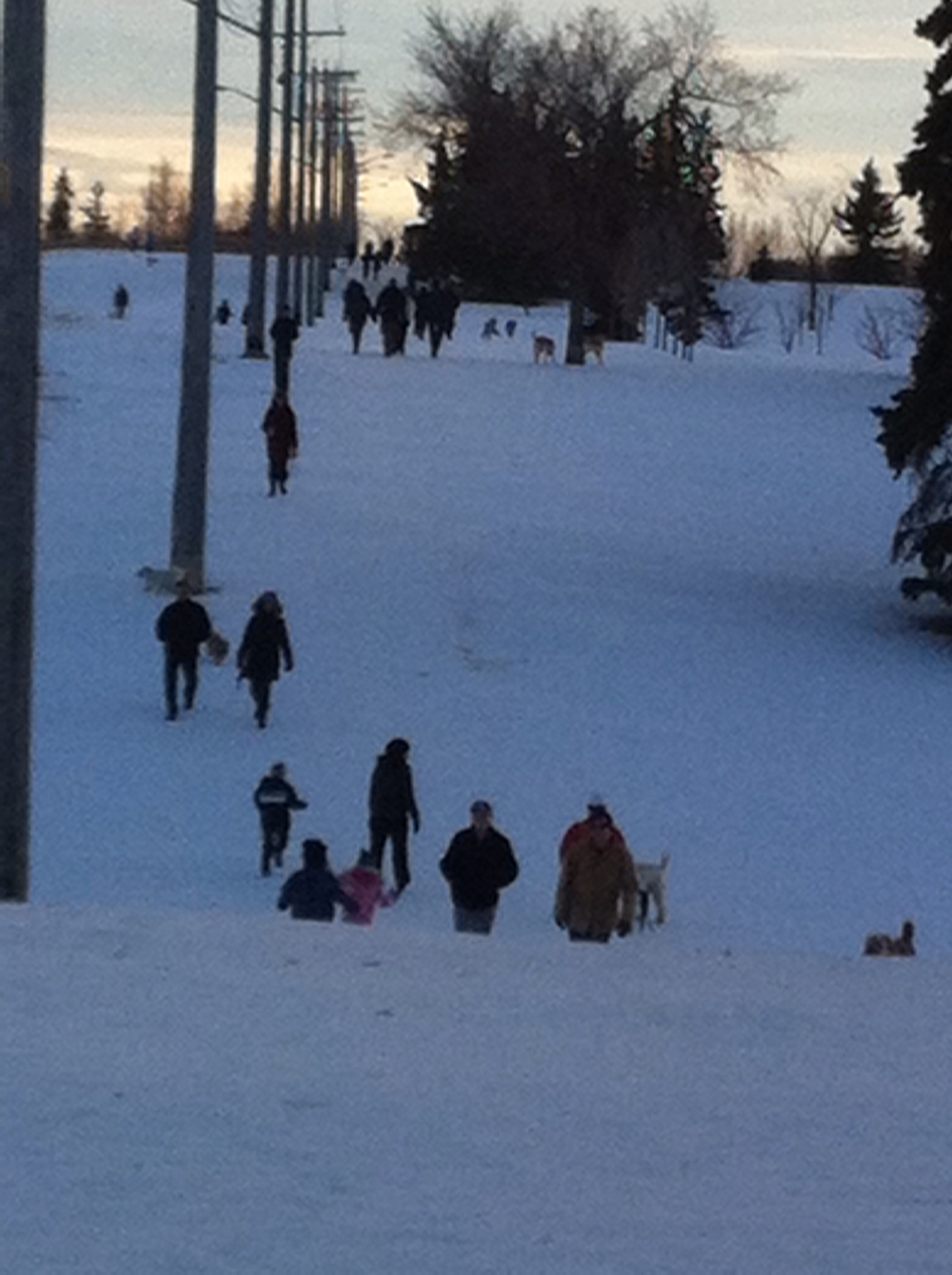 This is a picture taken at dusk in the winter at Calgary's River Park one of over 150 city dog parks. There is a parade of people their dogs along the promenade from one end of the park to the other all day long, but especially in the evenings and weekends.