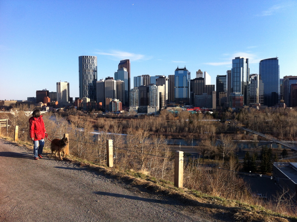 Along the north bank of the Bow River are a series of bluffs that have become urban dog parks. At the top is a promenade which offers spectacular views of the City skyline and river valley.
