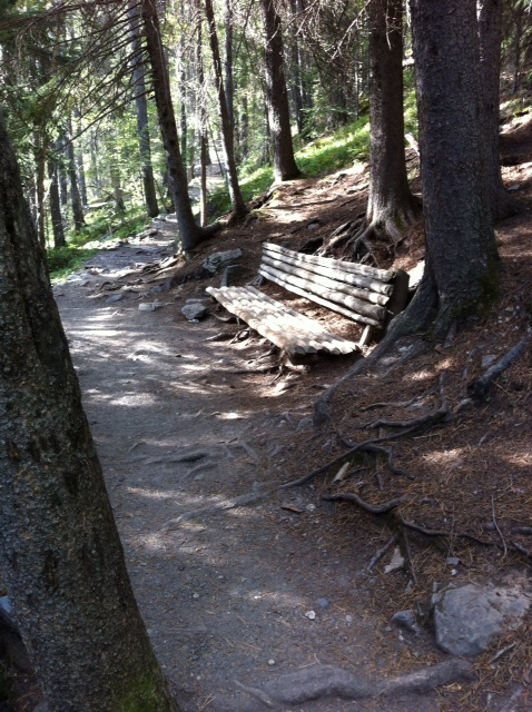 A view of the trail and one of the rustic benches along the way.  It is hard to imagine how Lawrence Grassi could have envision a trail up to the lakes through the virgin forrest a 100 years ago. Let alone build it!