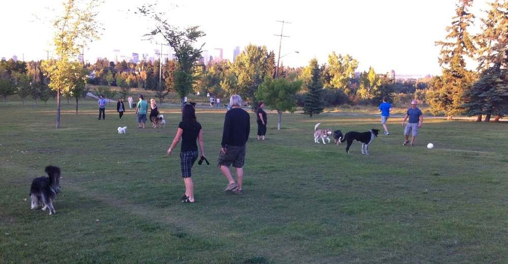 A summer evening stroll in the dog park is enjoyed by people and dogs of all ages and sizes.