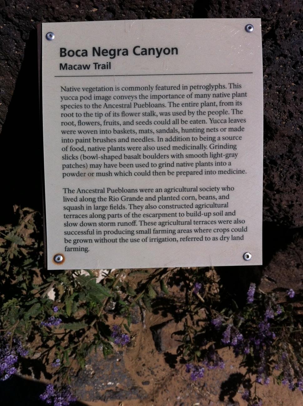 macaw trail 2