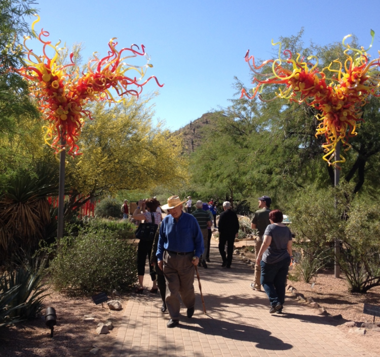 Exploring the Desert Botanical Garden was one of the highlights of our visit.