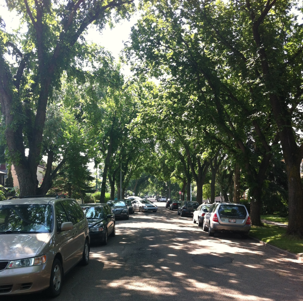 Wonderful tree canopied street in Westmount, Edmonton.