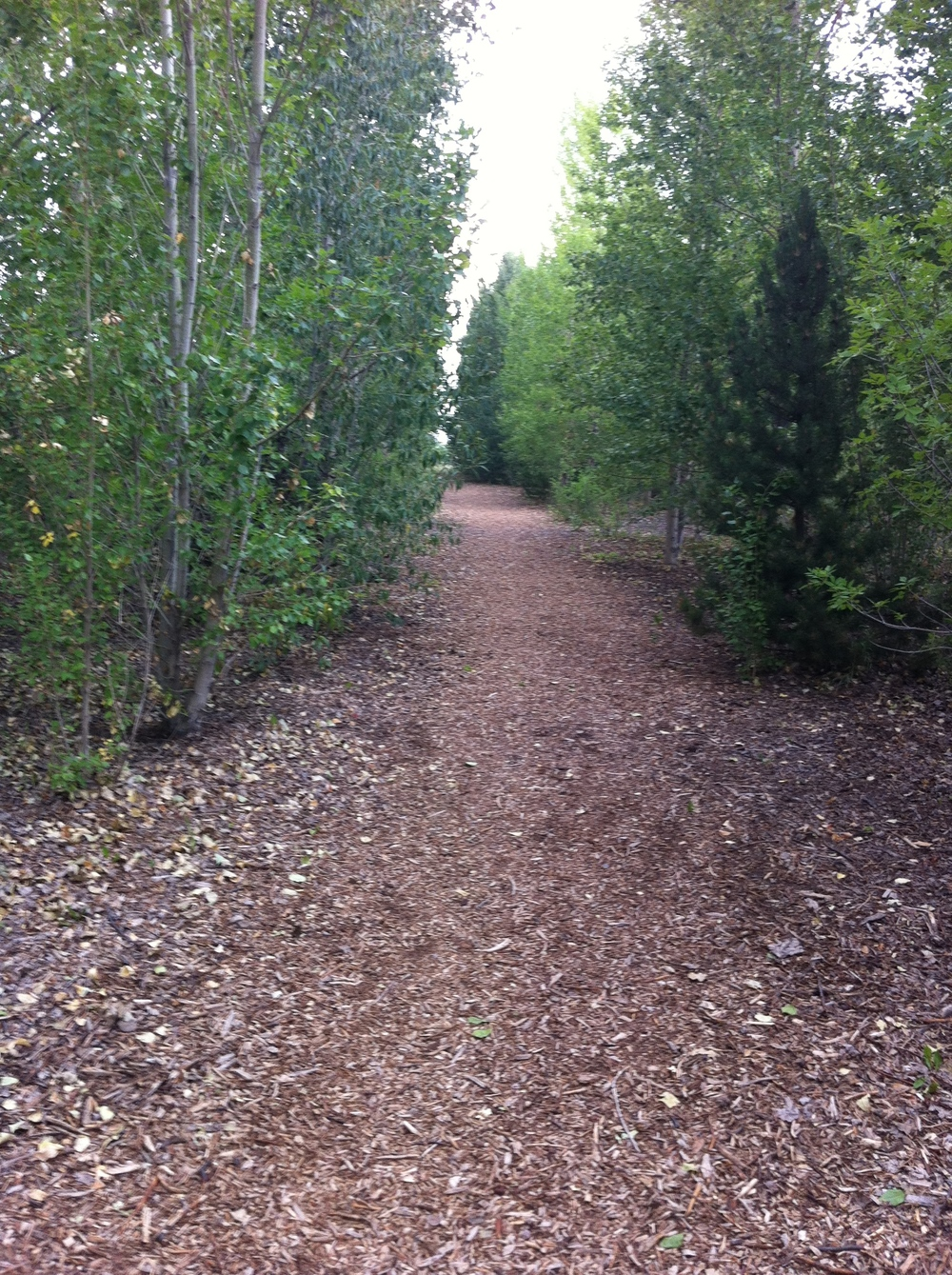 Trail through the Birth Place Forest that gets you to the gardens.