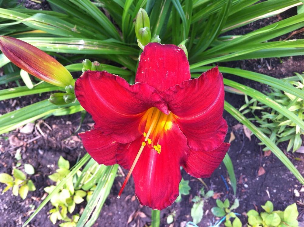 flower pistal